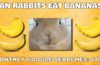 Can rabbits eat bananas