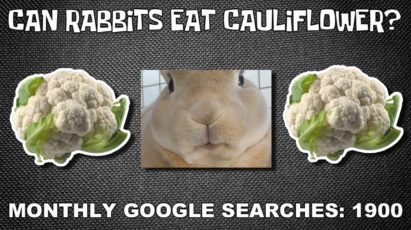 Can rabbits eat cauliflower