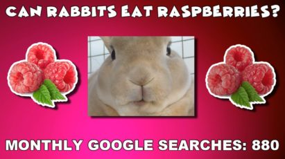 Can rabbits eat raspberries