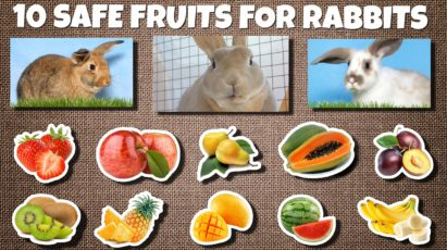 Safe fruits for rabbits