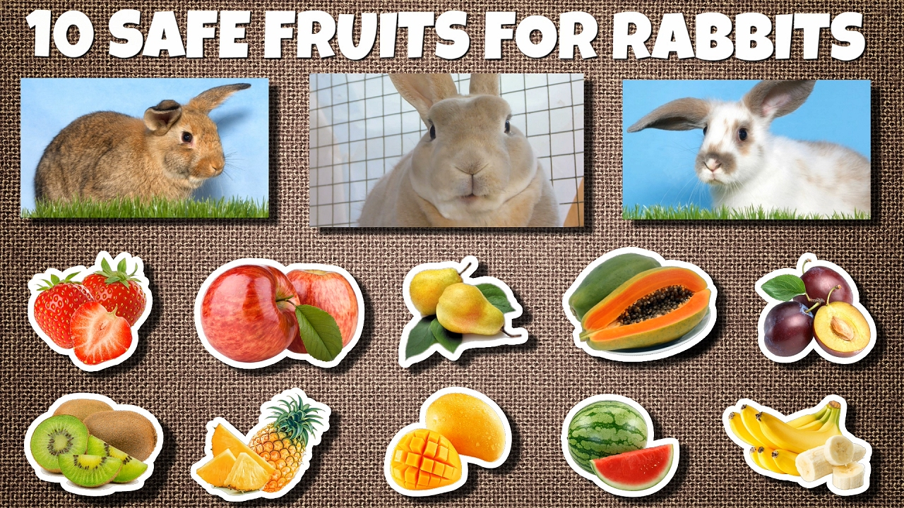 10 Safe fruits for rabbits