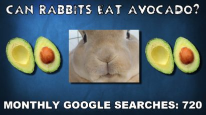 Can rabbits eat avocado