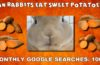 Can rabbits eat sweet potatoes