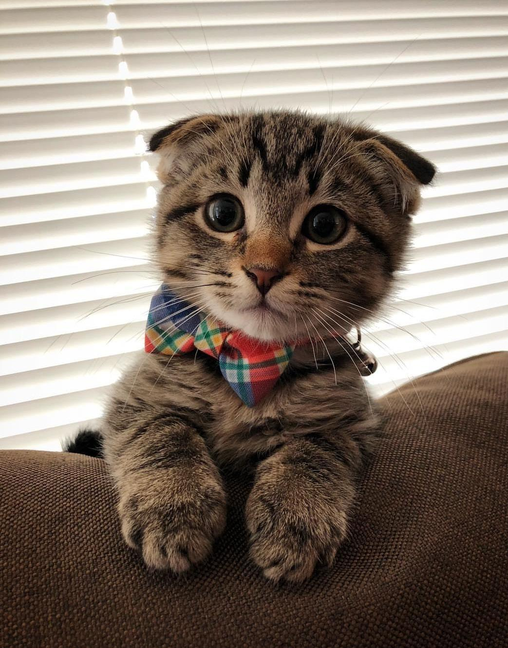 Cute innocent looking kitten - TinyPetsTube