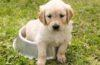 Cute puppy sitting in a bowl