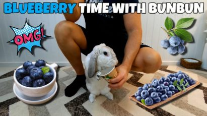 Cute rabbit eating blueberries