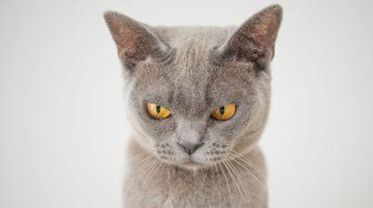 Funny cat with a suspicious look