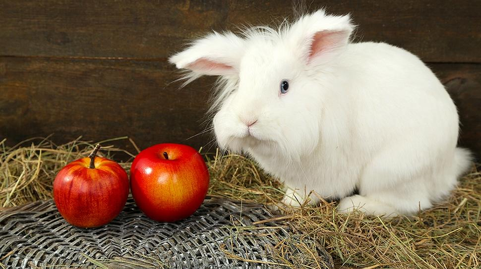 Rabbits should have fruits in their diet