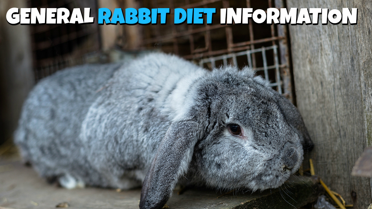 Rabbit diet information