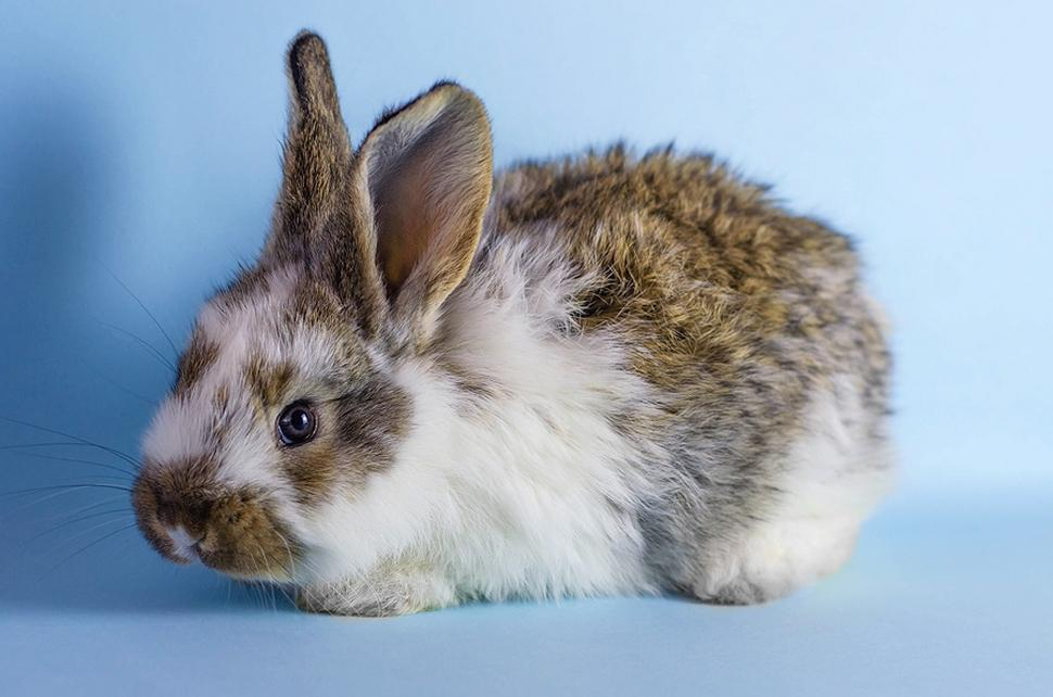 Rabbit diet in different life stages - Pet rabbit care