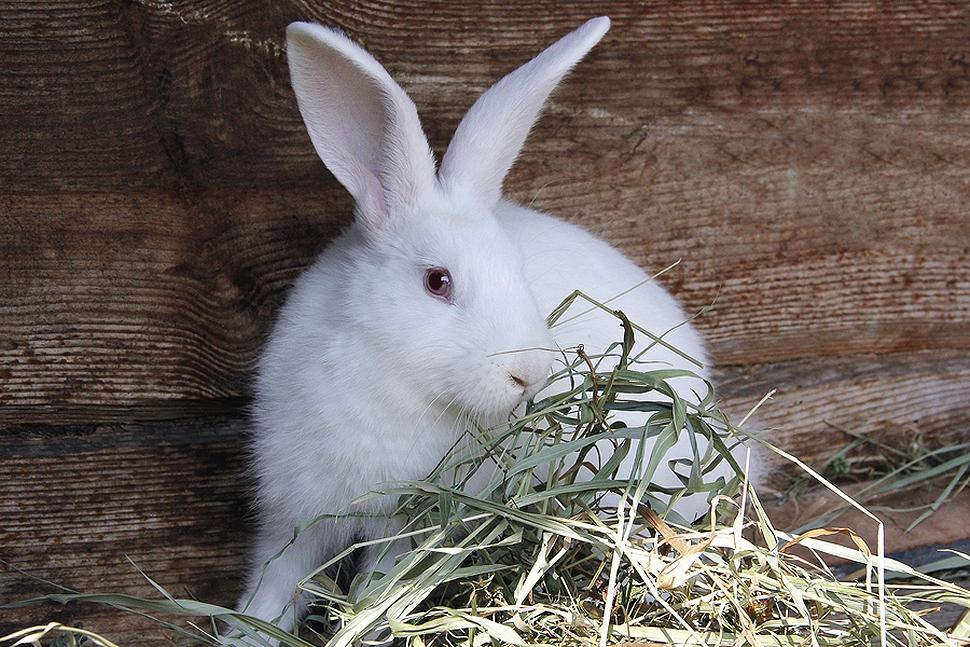 Rabbits main food should be hay