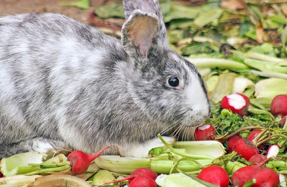 Rabbits should have vegetables in their diet