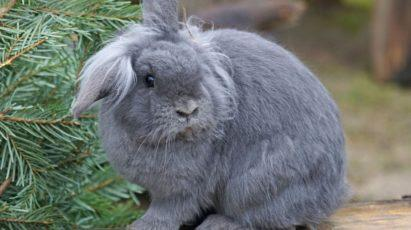 Rabbit with funny hair