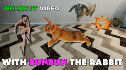 Funny rabbit video