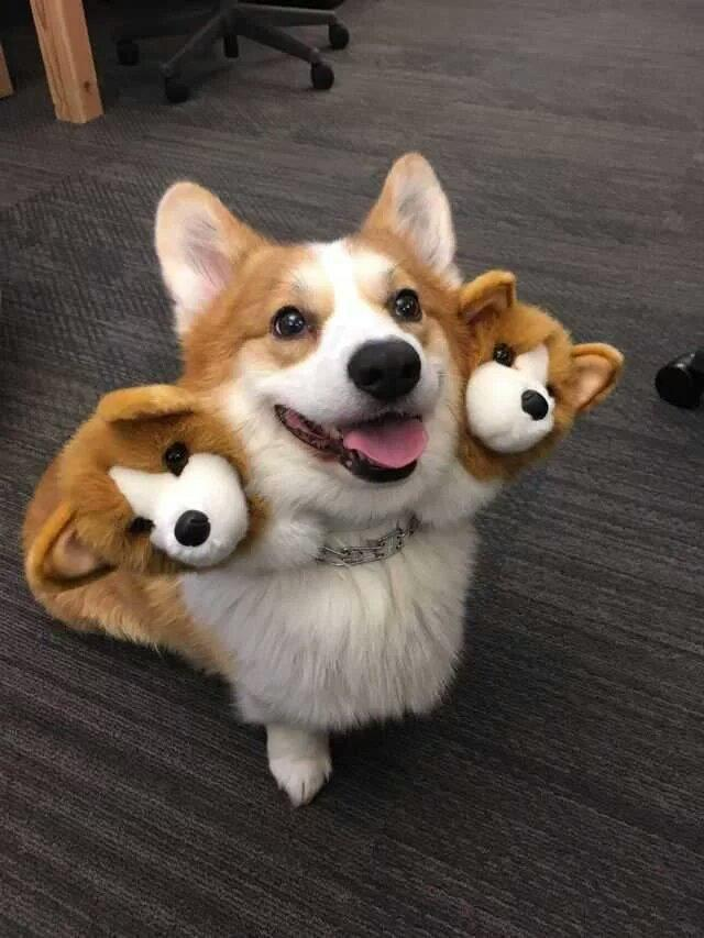 Cute three headed dog