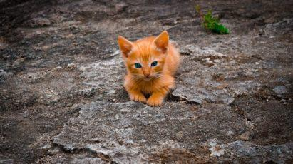 Tiny orange kitten